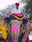 elephant_colorful_face.JPG (68601 bytes)
